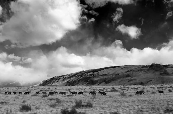 Patagonia horses